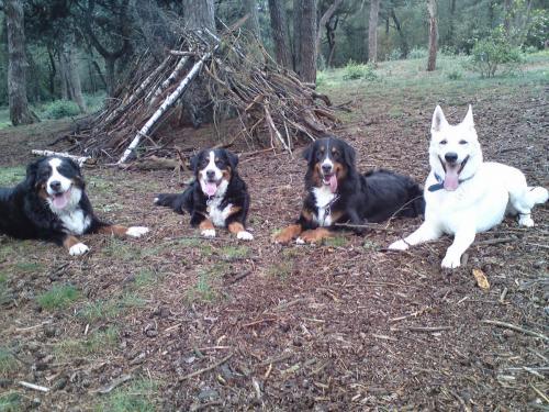 Foto's honden Syllies